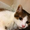 【猫ブログ】ちびちゃんの日常 猫ちゃんの毛繕いとは・・・。