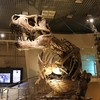 圧倒的博物館…!『国立科学博物館』にいってみた in東京