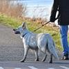 成犬の散歩は10km必要?犬種による違いとその理由とは?