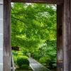 一休寺の新緑と皐月