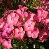 万博公園 夏の花 花言葉 その3