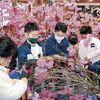 「令和申酉会」さんが曳山祭に向け人形の展示作業や、桜飾りの制作に取り組みました
