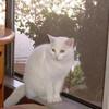 店舗で愛猫が静養しています。猫に抵抗を覚えるお客様は、来店を控えて頂ければ幸いです。
