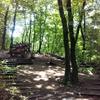 森林浴デート