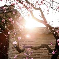 韓国語の効果的な単語学習方法とは!?