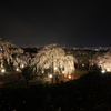 宇治市植物公園(枝垂れ桜ライトアップ)