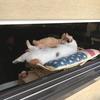 窓辺で相棒と眠る猫が可愛すぎる前編(in長崎)