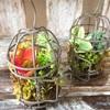伊丹 全国通販 多肉植物園 虹の玉