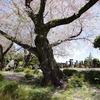 桜の森の満開の下。