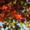 京都の嵐山公園で紅葉を写す