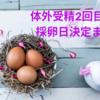 【不妊治療】2回目の体外受精・ショート法(ゴナールF+HMGフェリング+クロミッド)と卵胞チェック