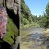 3密回避の静かな観光地チバニアンで化石と晩秋の虫撮り