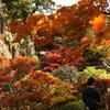2017年の那谷寺の紅葉は11月上旬から中旬が見頃らしい