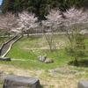 久江の川辺公園の桜が開花しました! 2019
