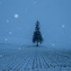 美瑛町にて吹雪の丘巡り【11月29日撮影】