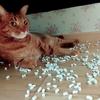 砂をばら撒く猫