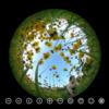 小人気分!黄色い花に囲まれる #360pics
