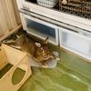 ウサギのちまき今日の1枚『朝のひととき』
