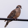 🐦野鳥の回【65】野鳥の撮り方に迷走するこのごろ