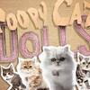 プーピーキャット・ドールズだニャン♬ グルグル、欲しい? /  Poopy Cat Dolls: Do you want my purr purr?