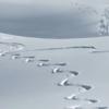 「初雪」と「新雪」の違い