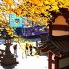 江ノ電 龍口寺の銀杏