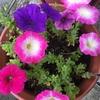 花はまだ増えてる印象はないかな🤔