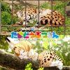 『けものフレンズ』最終回が最高だったので、サーバルちゃんに会いに多摩動物公園へ行ってきた