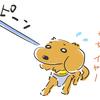 犬の多頭飼い暮らし日記:「いなとろ、注射にいく」