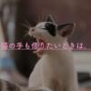 """【ネーミング】家事代行はダメじゃない! """"猫の手""""も借りて、忙しいときこそ賢く生きよう。"""