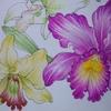 完成】ペリシア&ホルベイン色鉛筆でカトレアのページが塗りあがりました☆花日和花だよりより