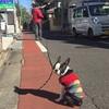 笹谷純先生#10 長いリードの訓練