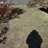 きのう見た風景⑧〜庭は私の遊び場〜