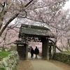 天下第一の桜とも称される!伊那市「高遠城址公園」の桜