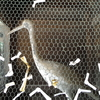 讃岐白鳥駅と白鳥神社。酉年の人に行ってほしい、鳥がかわいい神社(香川県東かがわ市)