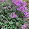 レッド・カーペット・タイムの花が咲いた