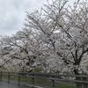 桜をブログで見る会2021 奈良高田千本桜と蜻蛉の滝編
