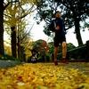黄色の落ち葉、踏みしめて