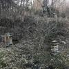 蜜蜂🐝巣箱の掃除