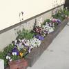 花壇の改良の成果