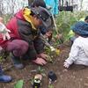 森のお遊び会 5月 雨の散歩 草木染め 草団子 夢の畑つくり