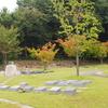 霊園風景 その15 「紅葉が映えて 樹木墓の神無月」
