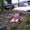 家の庭で苗床作り