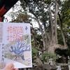 ご神木のカラー御朱印も追加 京都・満足稲荷神社