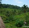 インドネシア在住のプレママさんへ捧ぐ、妊娠中にお腹を壊した私の反省点