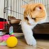 一人遊び用のおもちゃでテレワークが捗る!(はず…でした…)