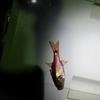 夜釣りにおけるボウズ逃れを述べる。