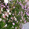 アパート & わが家の花たち