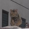 台風接近の日の猫たち