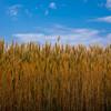 小麦をやめるだけで3キロは痩せる?グルテンフリーを始めた3つの理由